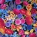 Floral Petal Party in Black Cotton Fabric Fabric Traders